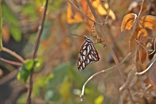 newly emerged butterfly