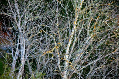 trees, lichen